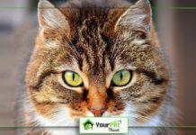 Top 5 Cutest Cat Breeds