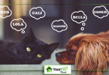 Pet Names for Girls