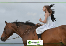 Horse Riding Lessons