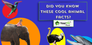 Cool Animal Facts