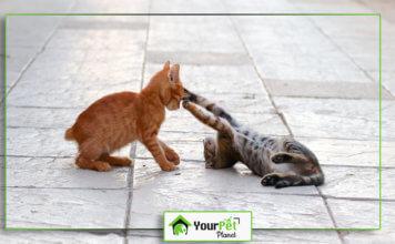 Animal Care Games
