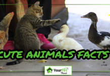 Cute Animals Facts