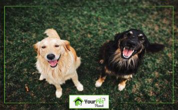 Ho Do Dogs Breed