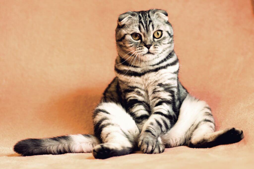 Cats Breed